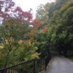 11/11/2018 Takatsuki Riverside Walk: Refresh
