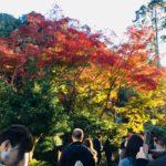 11/24/2018 MINOH WATERFALLS WALK NEW OFF MAIN PATH COURSE
