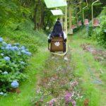 06/23/2019 Hydrangea Paradise: Myoken Stroll