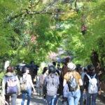 11/10/2019 Uji Tea Town & Bonsai Day Hike